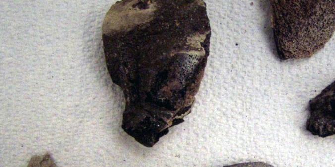 exhibit-bones-3